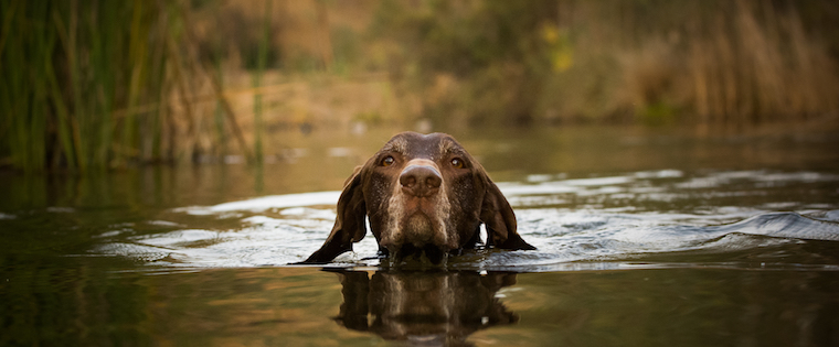 The Wet and the Wild: Summer Swimming with Dogs