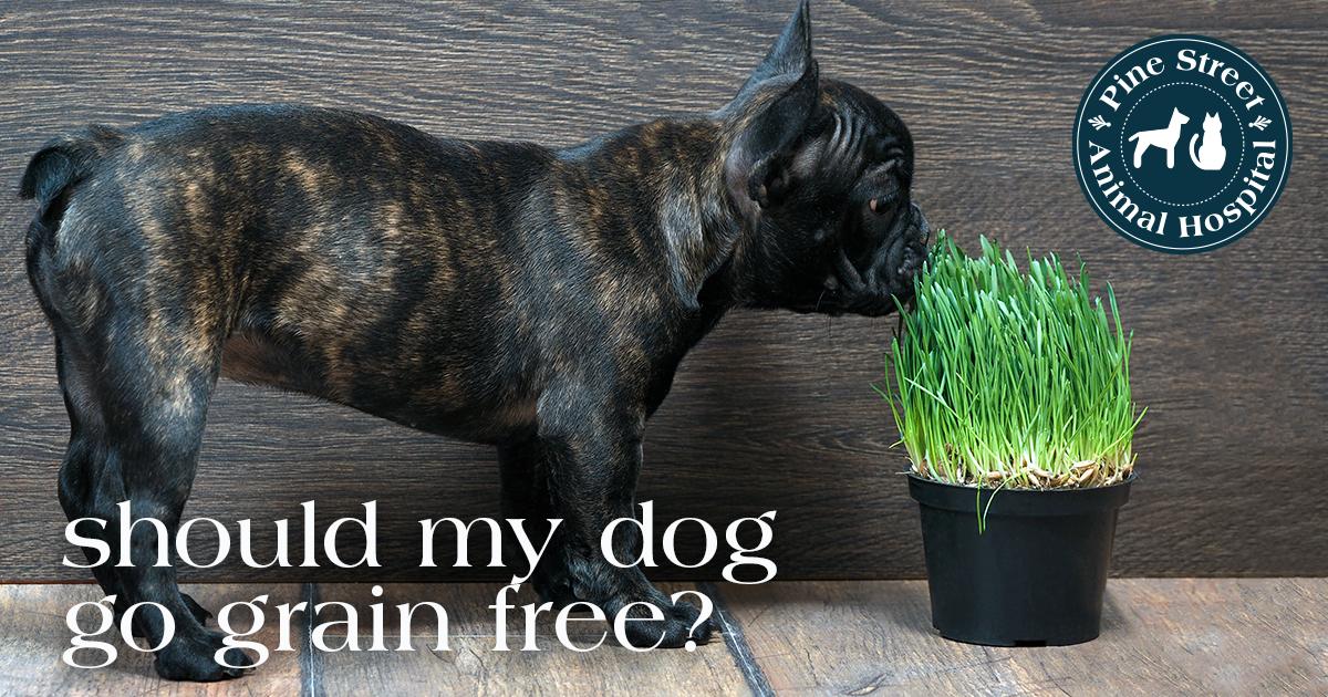 Does my pet need grain-free food?