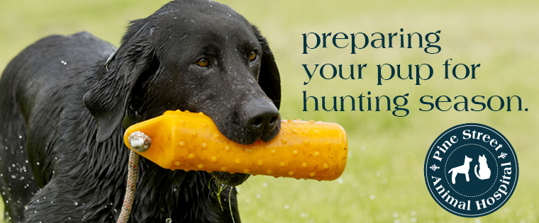 Get Your Gun Dog Ready for the Hunt