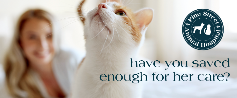 Are You Financially Prepared to Take Care of your Pet?