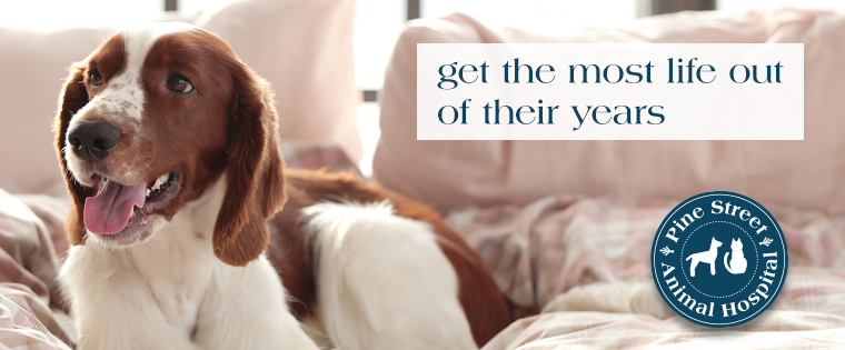 Getting the most life out of your pets