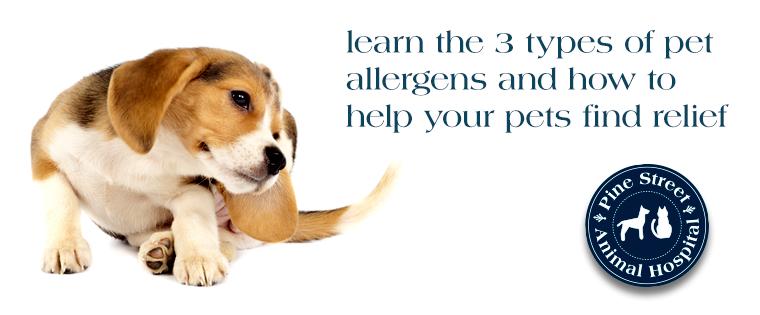 Understanding Skin Allergies