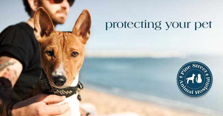 Vaccine protocols for companion animals