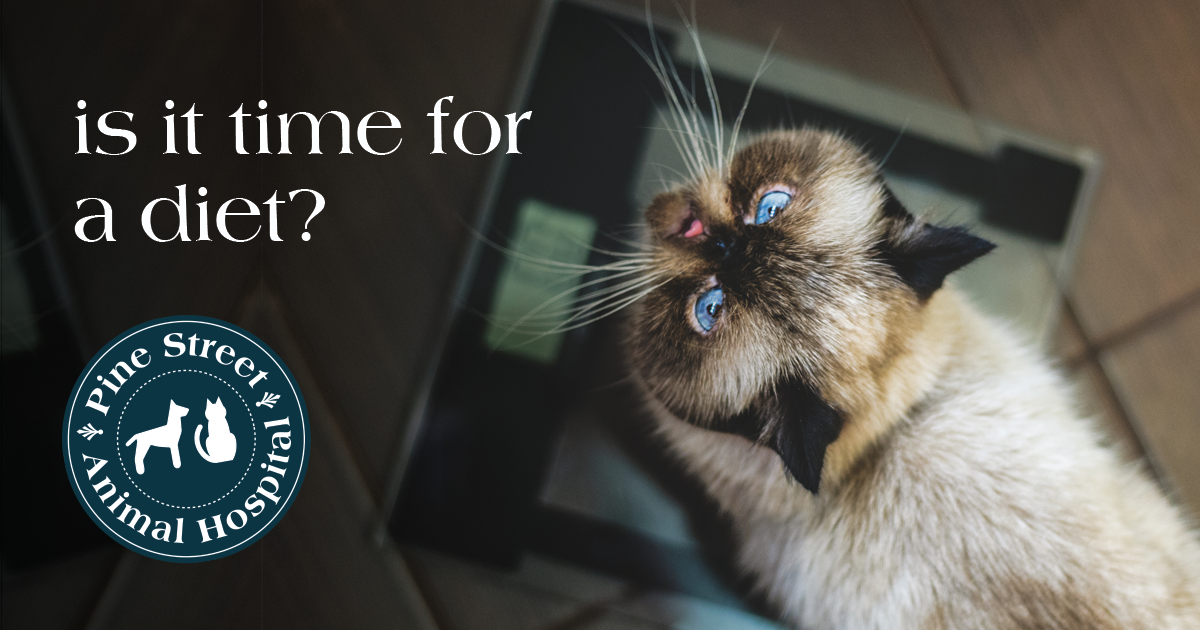 How (and why) to help your cat lose weight